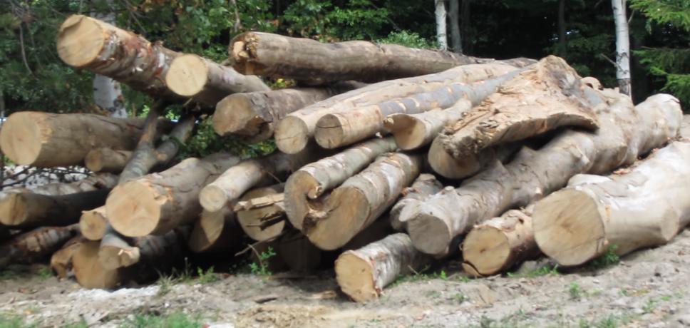Bărbat de 68 de ani din Slivilești, bănuit pentru furt de lemne